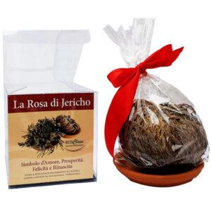 rosa-di-jericho-confezionata-1000x1000