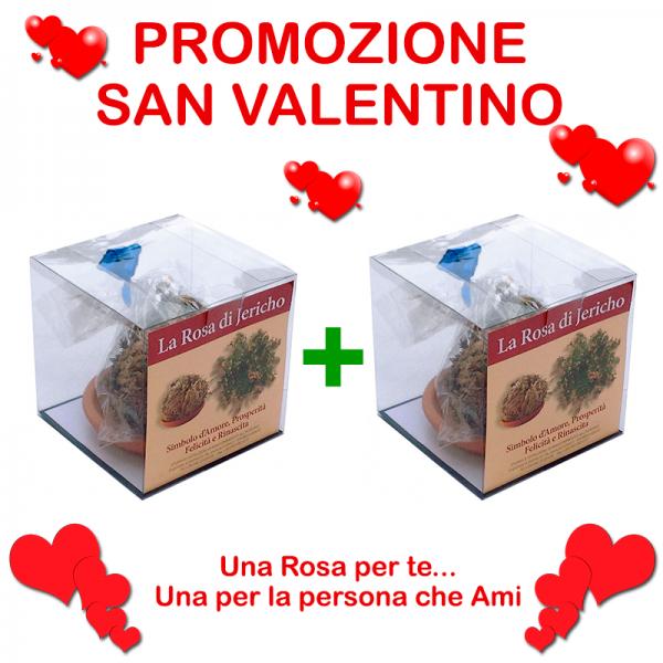 2-rose-di-jericho-san-valentino
