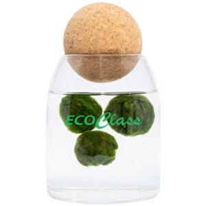 Marimo-family-EcoClass-1000x1000-ok